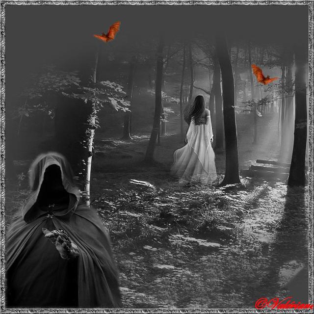 Ombres dans la nuit...