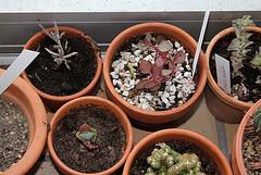 Plantes de Jeyssi
