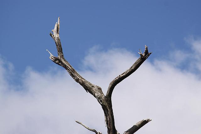 20120506 8905RAw [E] Baum, Herguijuela