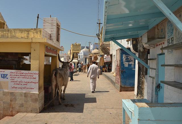 Pilgrim at Dwarka