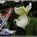 Entre musique et fleurs