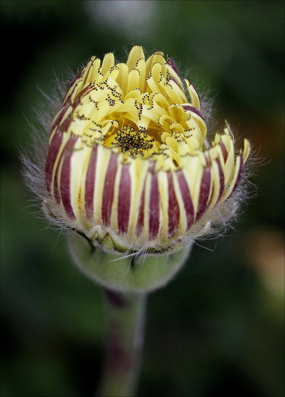 Une fleur par jour.... 12675150.b6935440.800