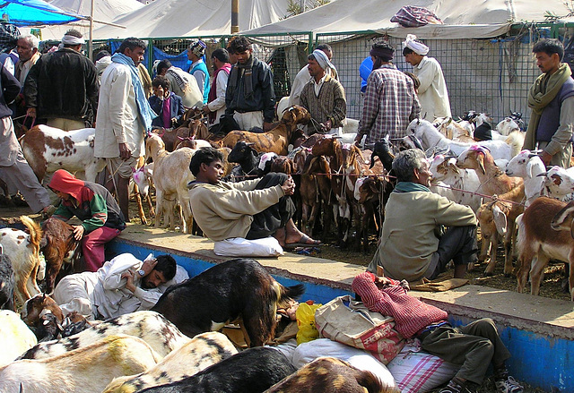 Goat Market the day before Eid