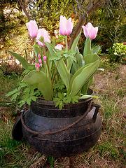 Coeur de Marie noyé dans les tulipes