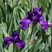 Iris Master Touch (2)
