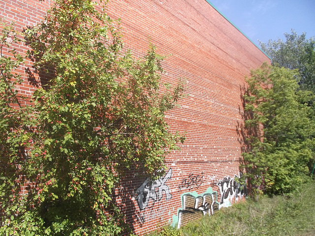 Façade, tag et arbuste / Shrubs, tags and brick wall.