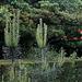 Pinus silvestris sous la pluie (2)