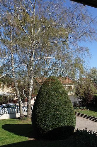 Jardin - If