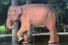 White elephant in Yangon