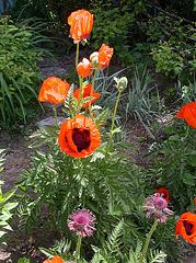 Les trois étapes de la floraison