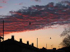 Härkämäki Sky 1