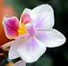 En orkidee till.