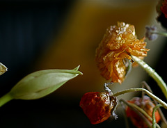 Commérage chez les fleurs