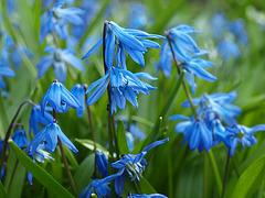 blaue Sternchen