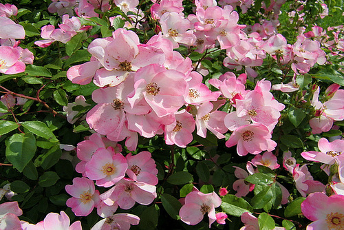 Massif floral