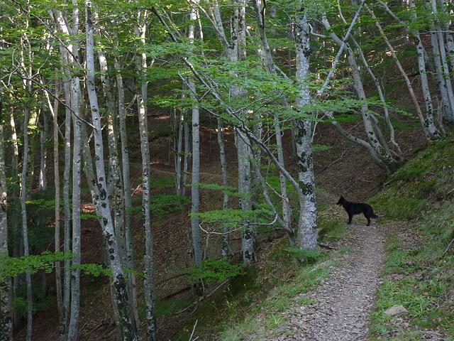 20140828 Fee Arboretum Espaze (29 al)
