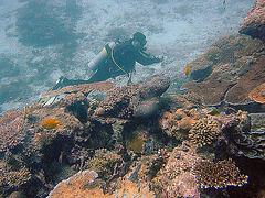 Dive partner
