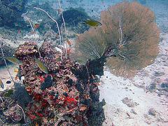 Under water sea fan