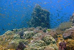 Under water landscape