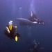 The diver and the manta ray