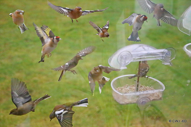 Rush hour at the feeder this morning