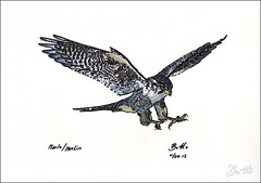 2012-04-11 Merlin-Marlo web