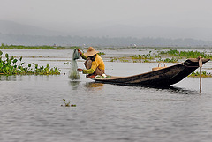 Fishing carp with a conical net on Inle lake