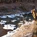 20120210 7140RAw [D~LIP] Werre, UWZ, Bad Salzuflen