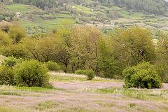 Trockenwiesen im Frühjahr (Vinschgau)