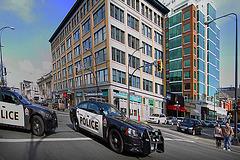 Street Racing Pigs (Lice Police)