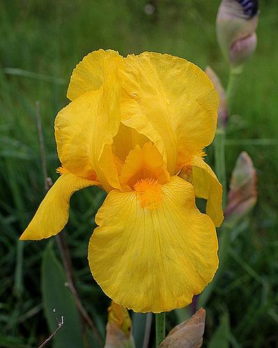 Iris Ola Kala (2)