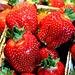 Erdbeeren - strawberry - fraise