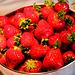 frisch vom Erdbeerfeld in den Mund