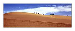 """""""le désert vivant"""""""
