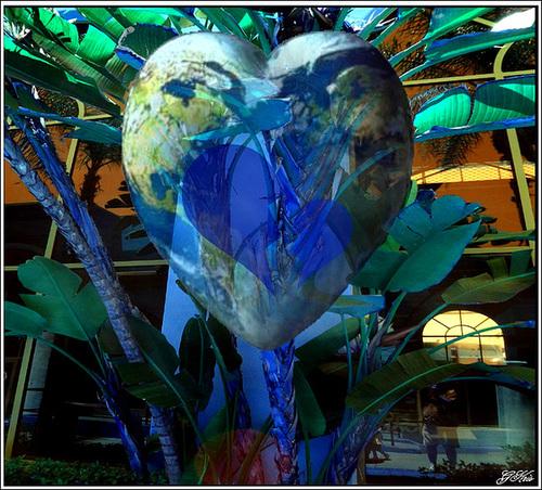 Au cœur............. de ...........l'arbre