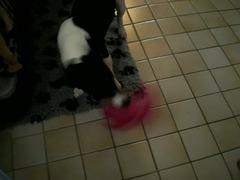 Leyla Kampf mit dem Latexschwein