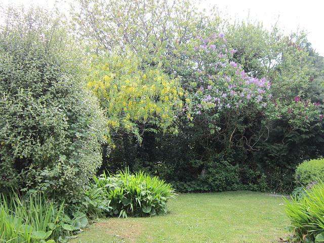 My garden this afternoon (19/5/13)