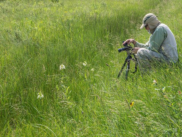 Walter photographing Platanthera praeclara (Western Prairie Fringed orchid)