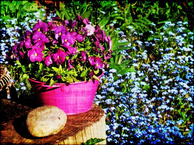 blossoms splendour