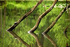 Turtle on a log (Maryland)