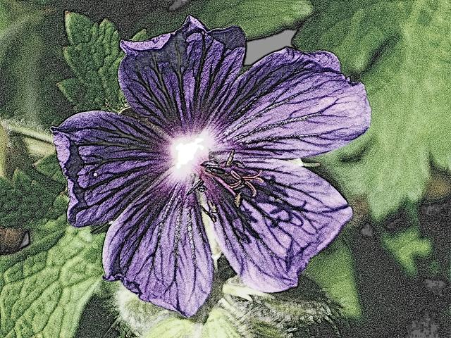 « Qu'est-ce que l'idéal ? C'est l'épanouissement de l'âme humaine. Qu'est-ce que l'âme humaine ? C'est la plus haute fleur de la nature. » JEAN JAURES