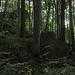 Zerklüftete Dolomitklippen des Ith  im Buchenwald bei der  Rothesteinhöhle