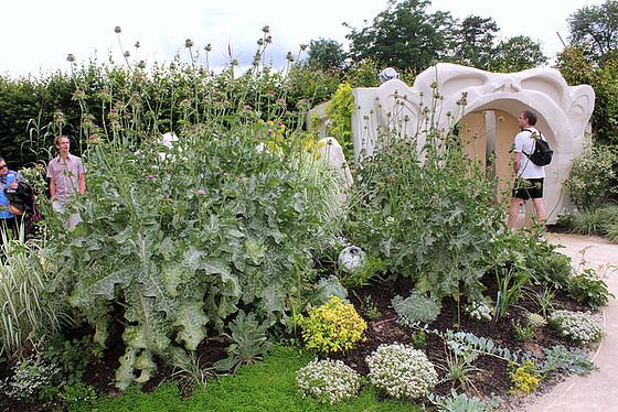 Jardin 23  Fruit de l'imagination- Chardon -Marie