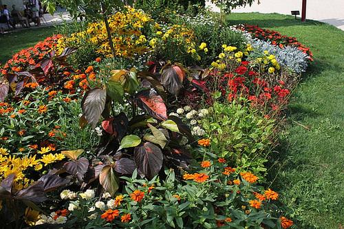 Massif multicolore avec une belle Acalypha
