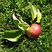 der Apfel liegt recht weit vom Stamm