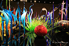 Chihuly sculptures (1)