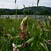 Fleurs dans les herbes