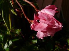 fleurs de mon jardin en septembre