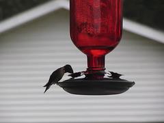 Kolibri - Video