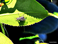 Leaf with a fly